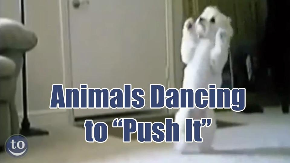 "These animals love dancing to Salt-n-Pepa's ""Push It"""
