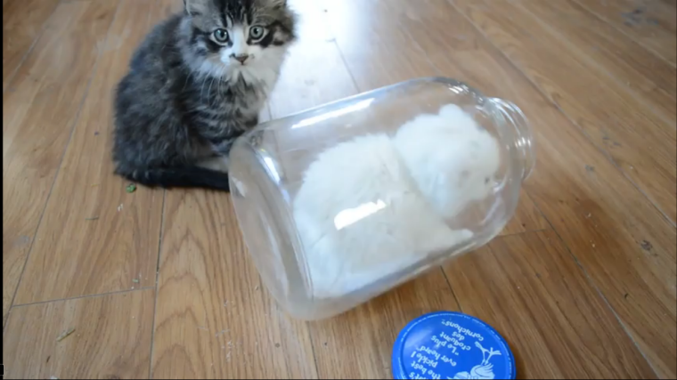 This little white kitten discovers just how fun jars can be (VIDEO)