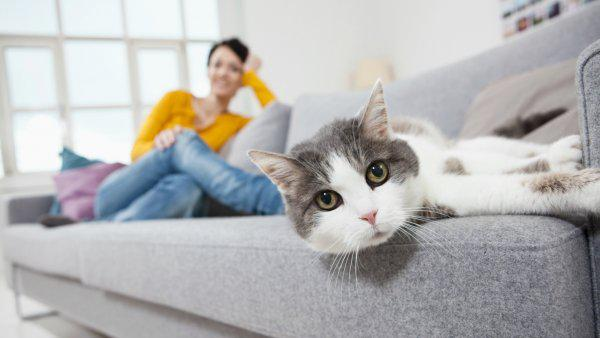6 Tips for apartment hunting with pets