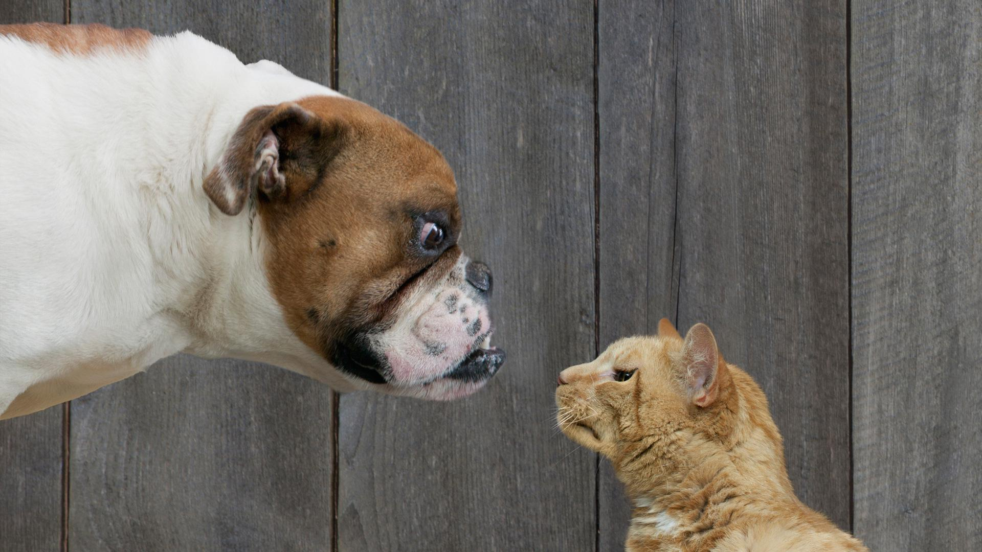 This is how dogs really feel about cats