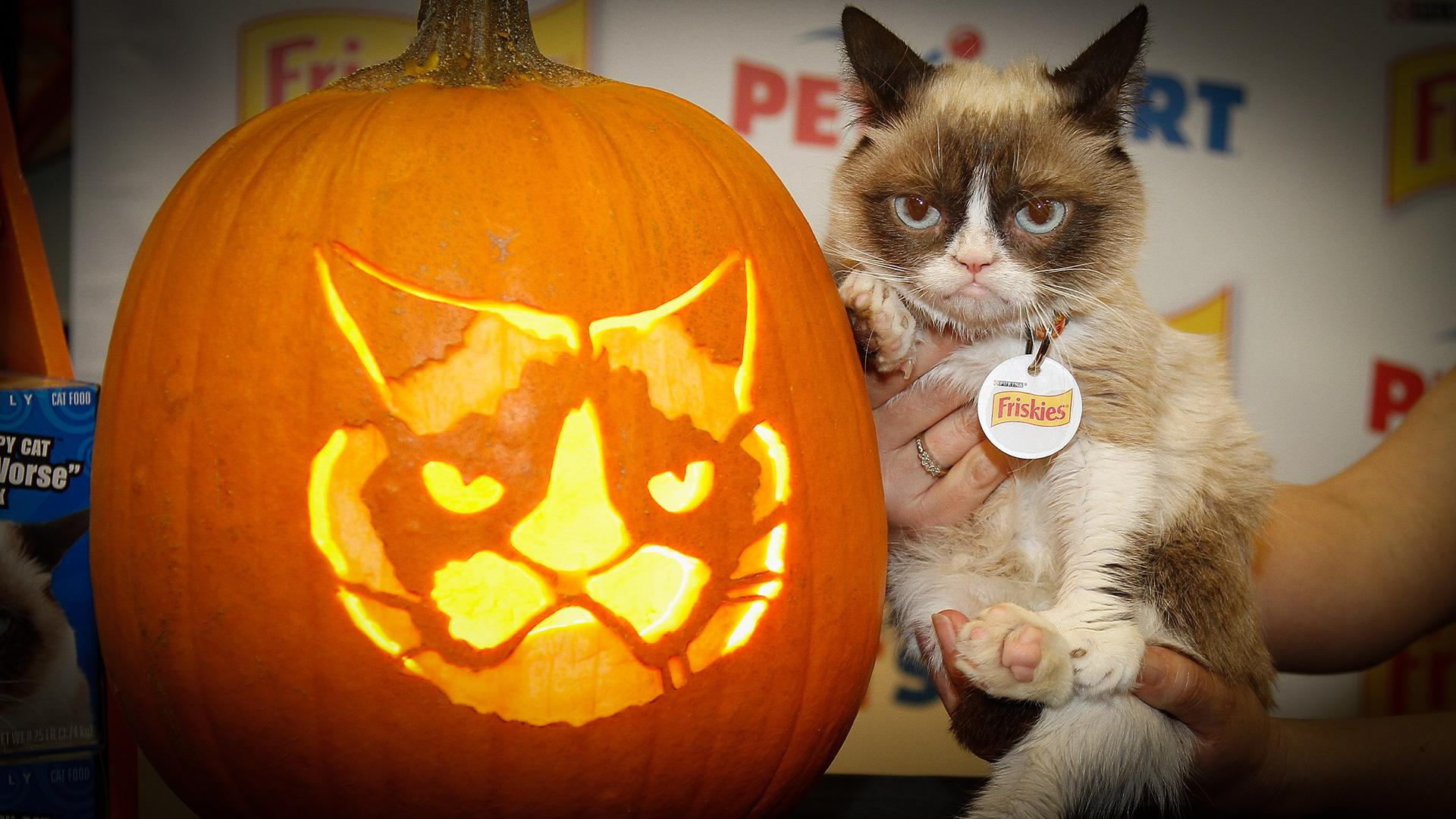 Health Benefits of Pumpkin for Pets – Thanksgiving Food ...