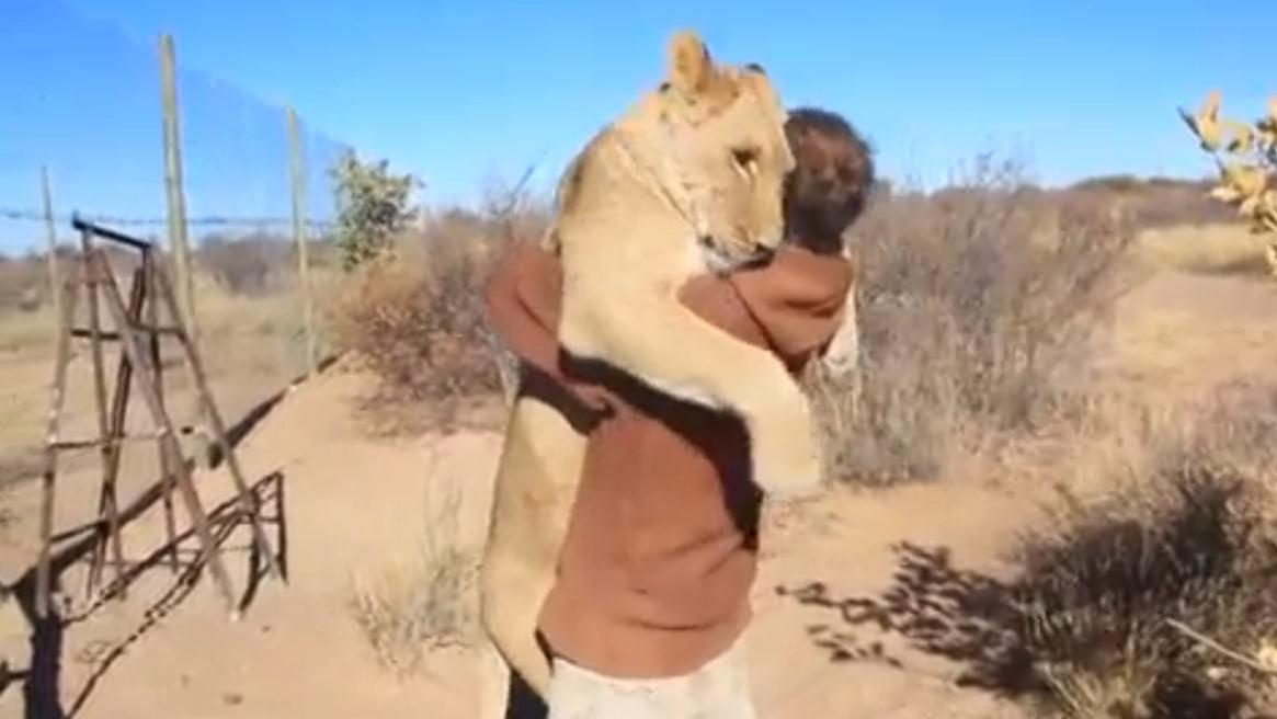 Man and his big lion buddy hug it out (VIDEO)