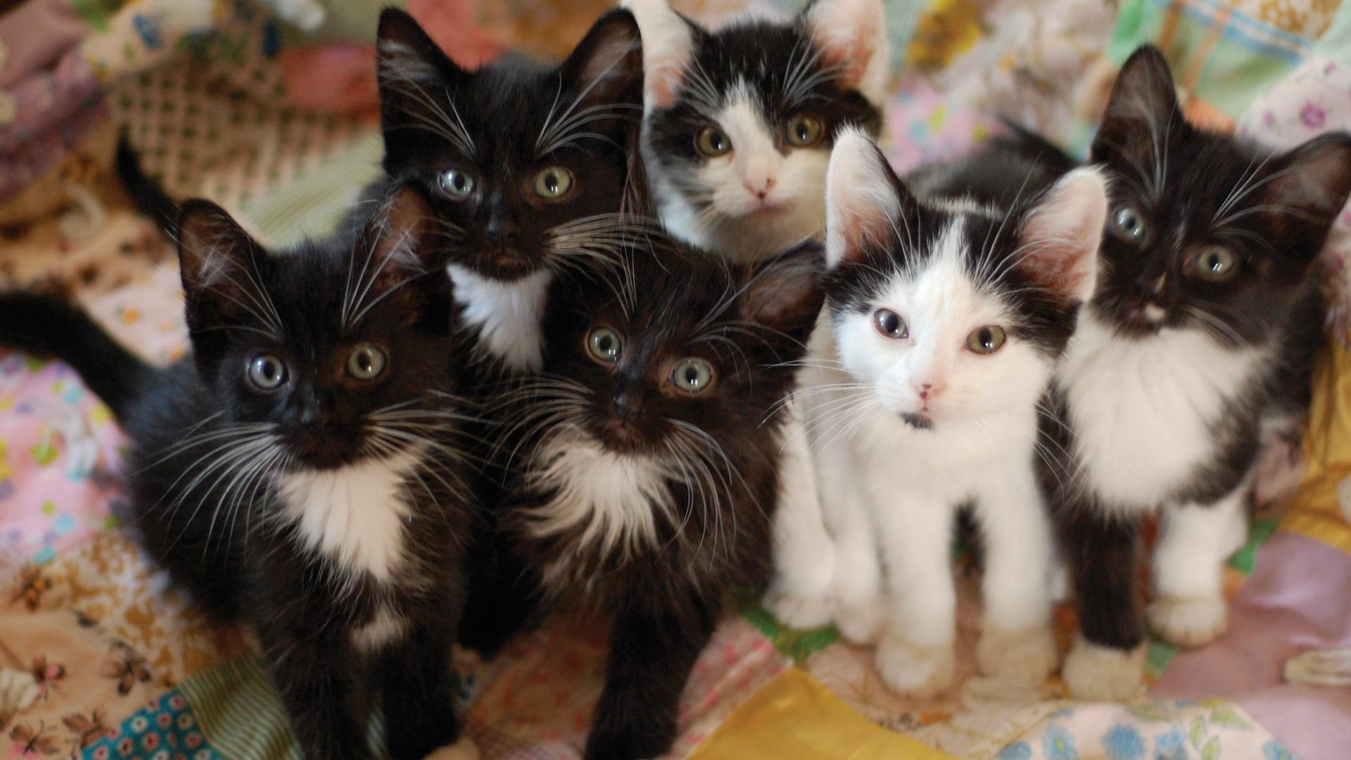 kittens cat many abandoned animals litters area getty birth sheknows cinotto laurie shelter bay moment pets