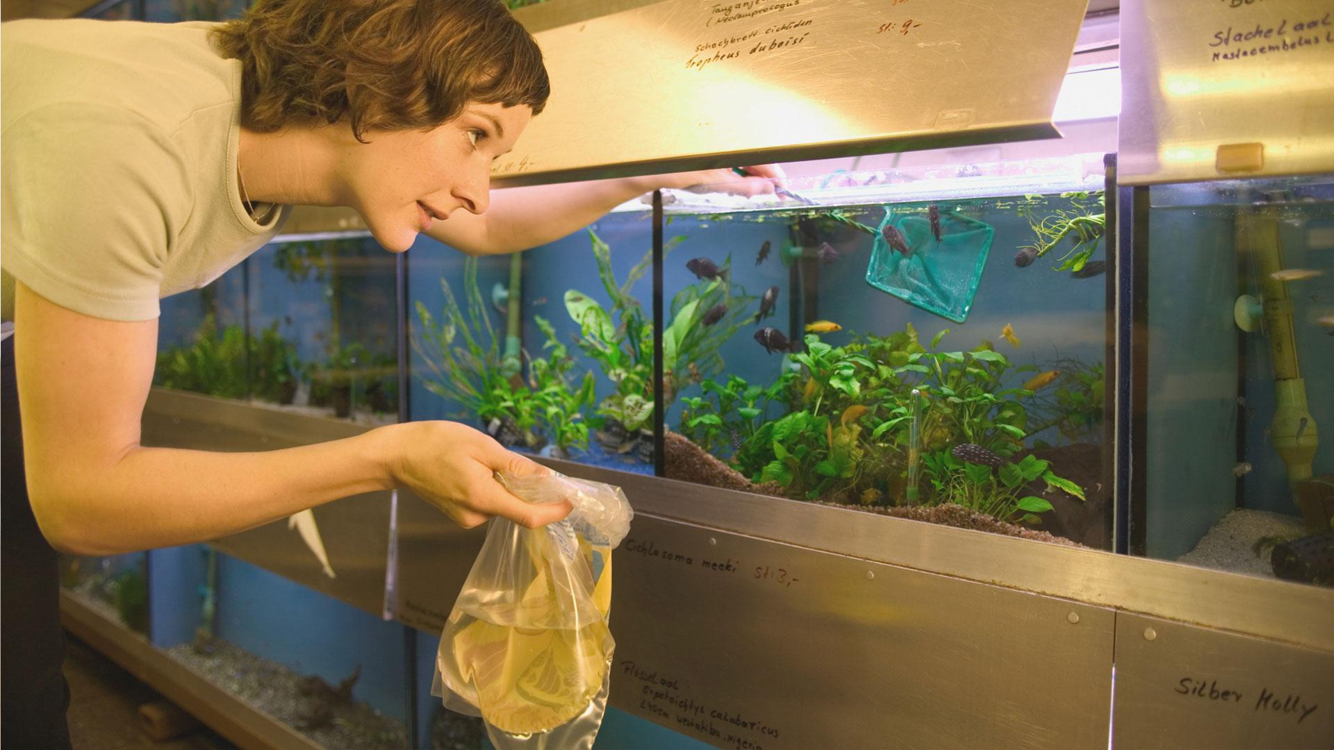 How to choose a freshwater fish as a pet