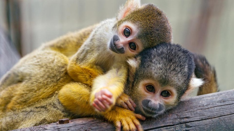 The most adorable animals 2014 had to offer